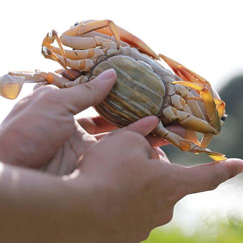 如何挑选好的黄油蟹